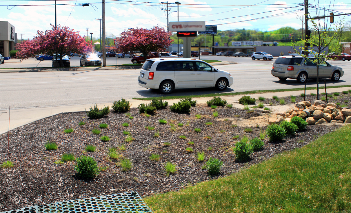 Native Landscape- Wendy's on 42nd- Cedar Rapids, IA
